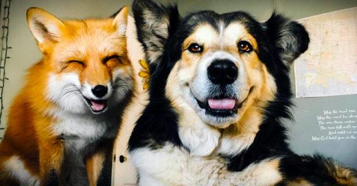 Zorro se hace mejor amigo de un perro