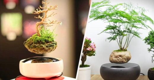 Cover-Air-Bonsai-Levitating-Magnetic-Bonsai-Trees-by-Hoshinchu