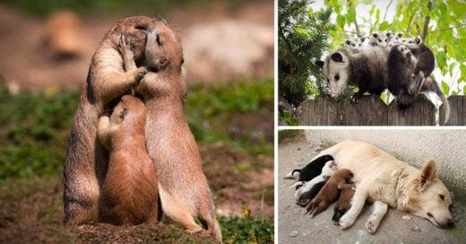 Cover-Las-expresiones-de-estos-animales-resumen-perfectamente-como-es-ser-madre