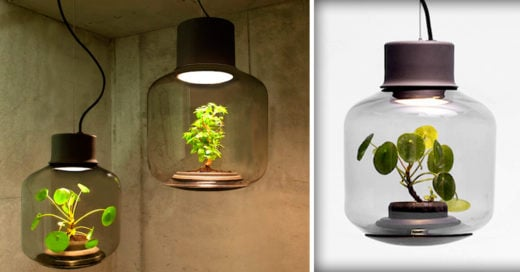 Cover-Terrarium-Lamps-by-Nui-Studio-Light-Your-Space-with-Suspended-Ecosystems