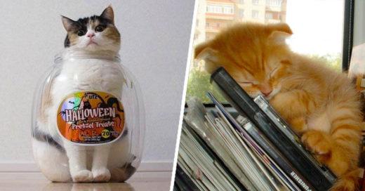 Cover-razones-para-no-tener-gatos