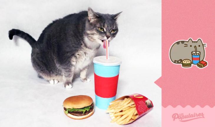 gato comiendo cosas de humanos
