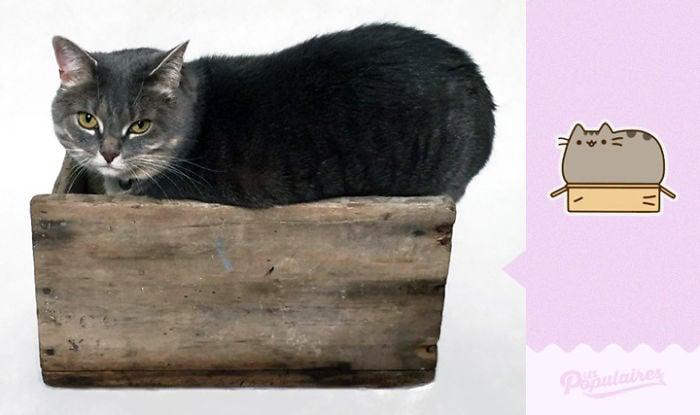 gato en una caja echado