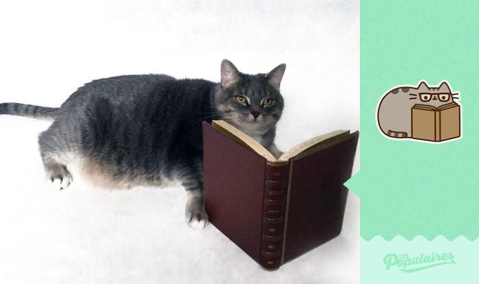 gato leyendo un momento