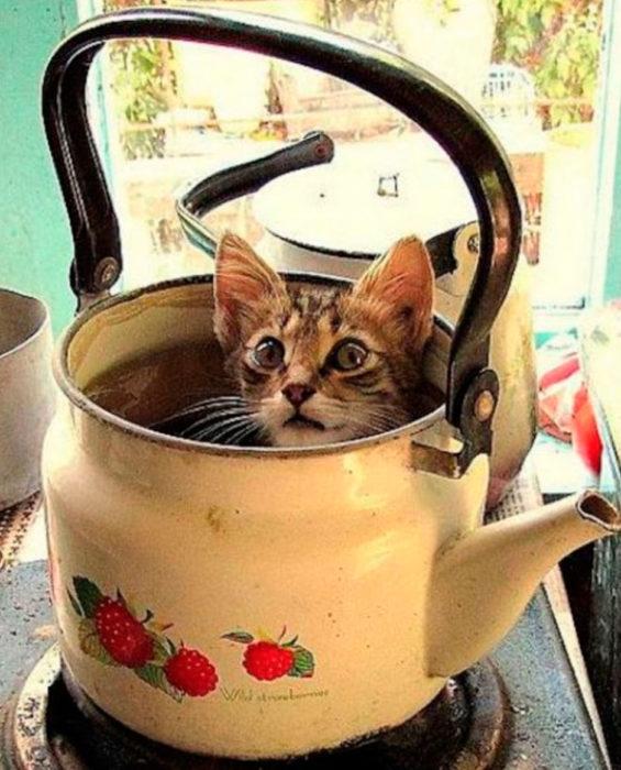 en la tetera de vieja de la cocina