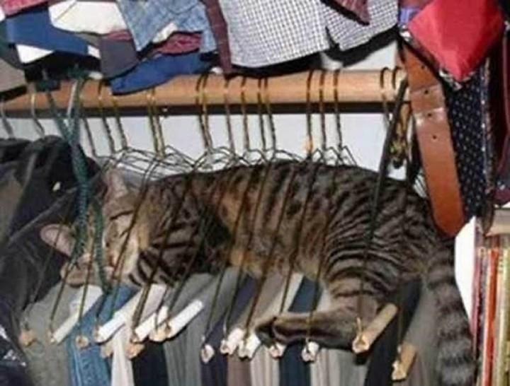 gato entre la ropa del closet