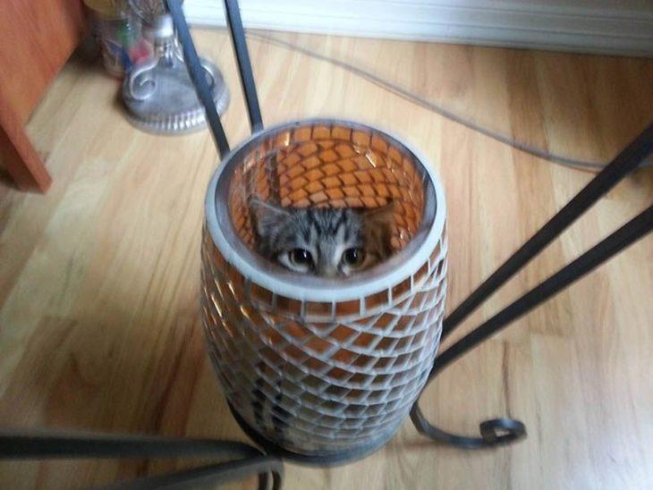 gato en los jarrones de su casa