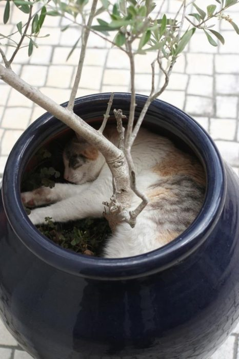 gato en la macerta