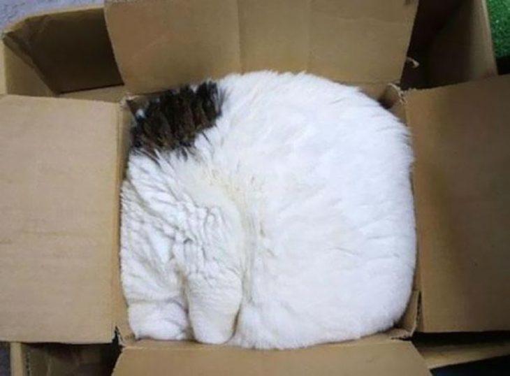 gato hecho bola en una caja