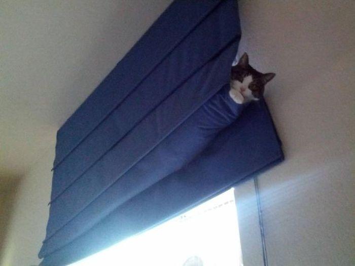 gato enredado en el cortinero