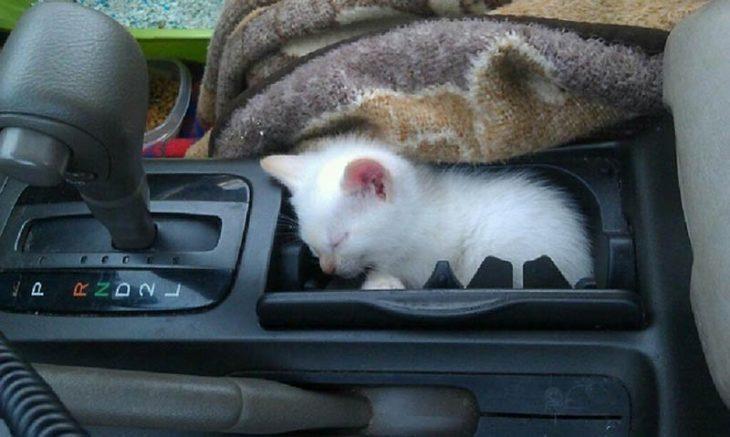 gato en una palanca de velocidades