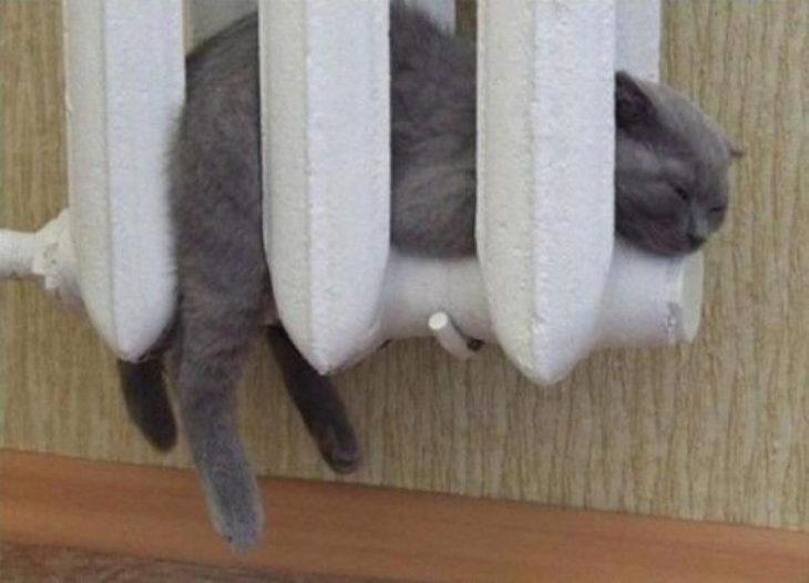 gato en el calentador