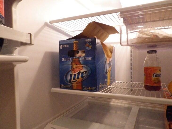 gato adentro del refrigerador en una caja de cervezas