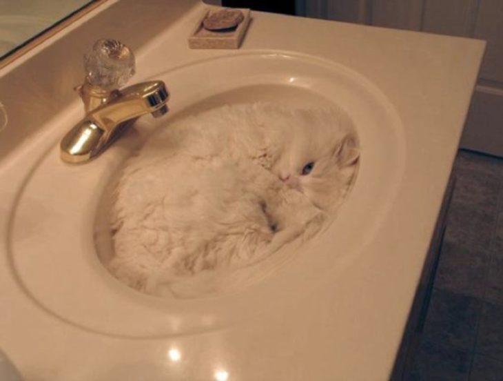 gato acostado en el lavabo de su casa