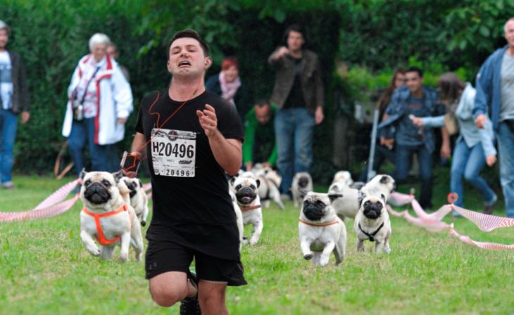 Maratonista con tapón en la nariz huyendo de una manada de pugs