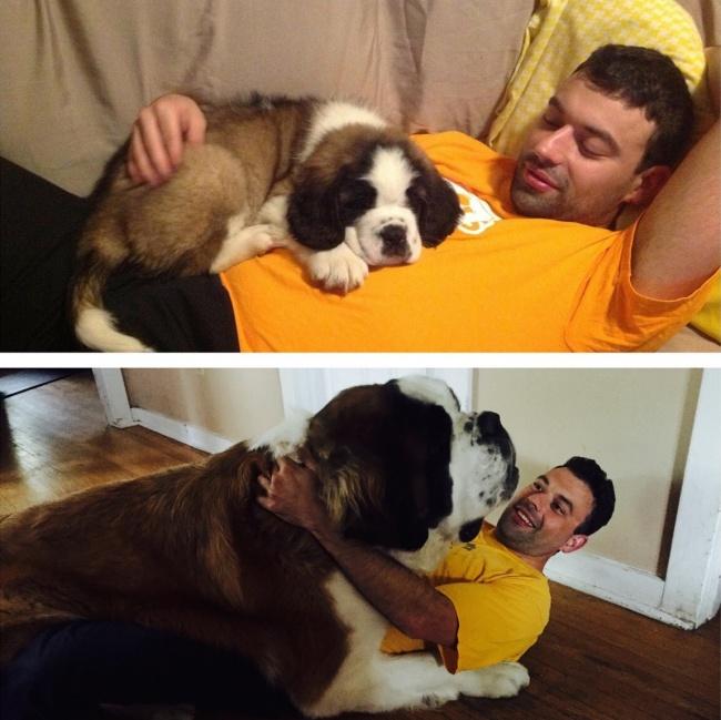 El antes y el despues del crecimiento de un perro