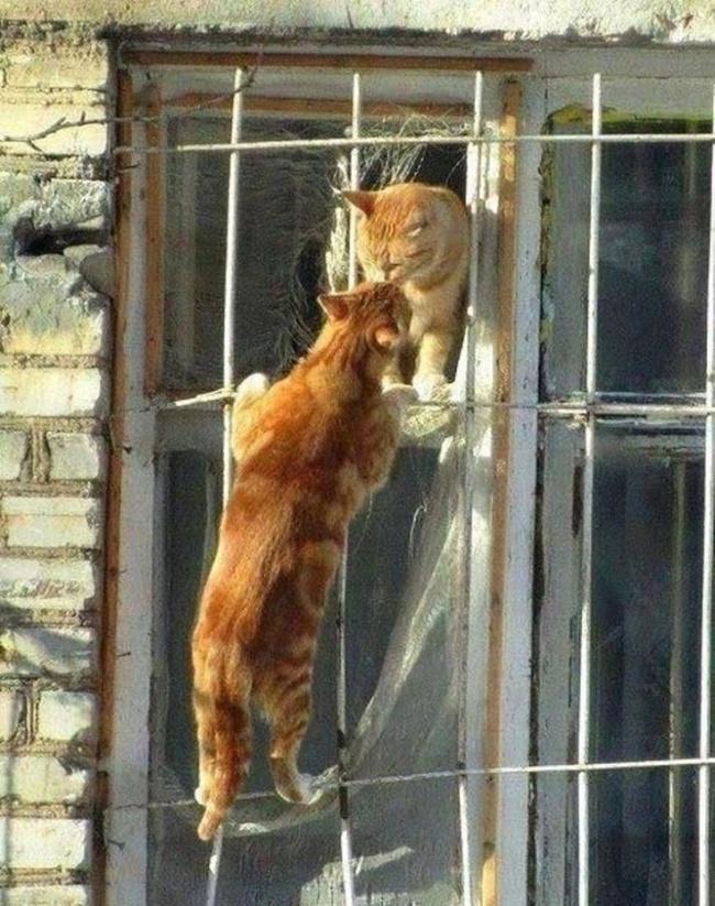 Gatos arriba de ventana