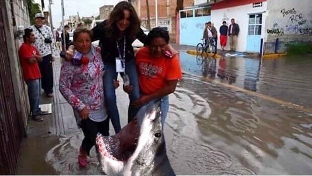 tiburón comiéndoselo