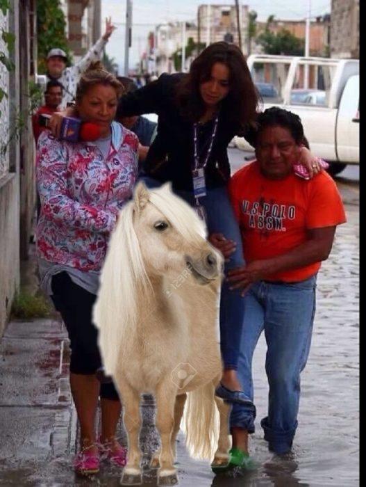 reportera en un pony