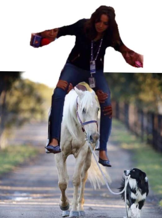 caballo areado por n perro