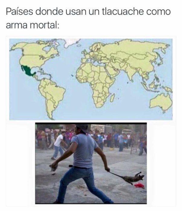 TLACUACHE EN EL MAPA