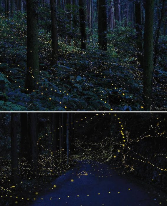Bosque de Luciernagas