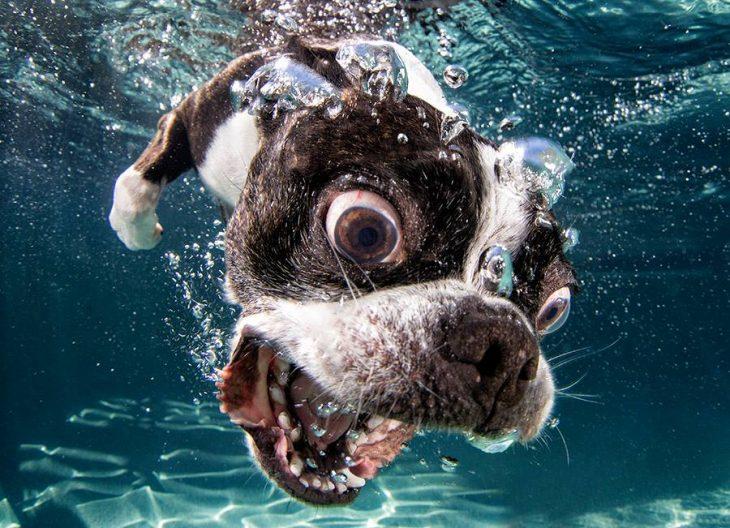 Fotografía de perro debajo del agua