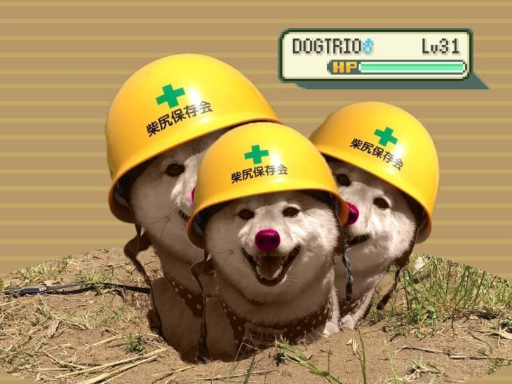 perro con casco como dodrio pokemón