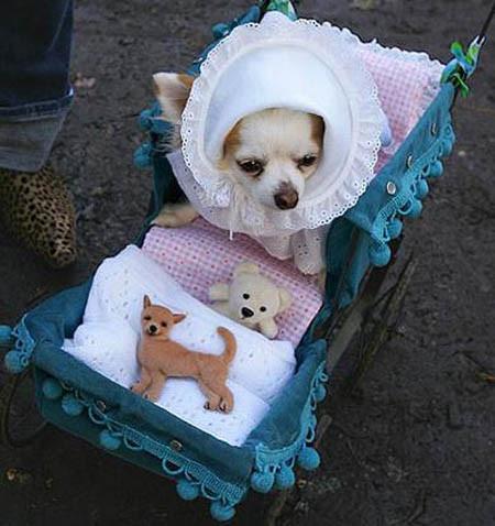 Perro con disfraz de carreola