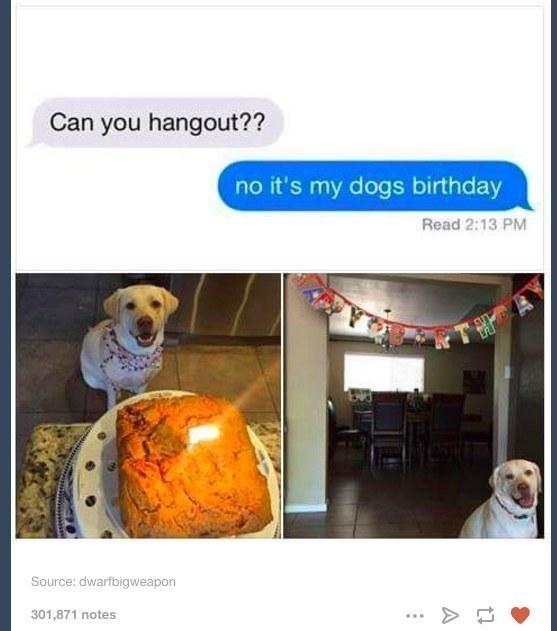 Perro festejando su cumpleaños