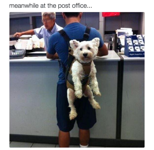 Perro con cartero
