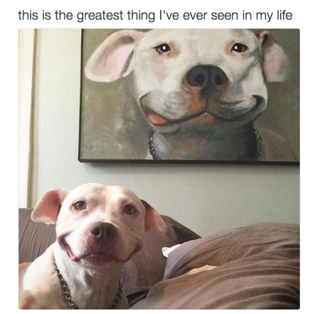 Perro con cuadro de sonrisa