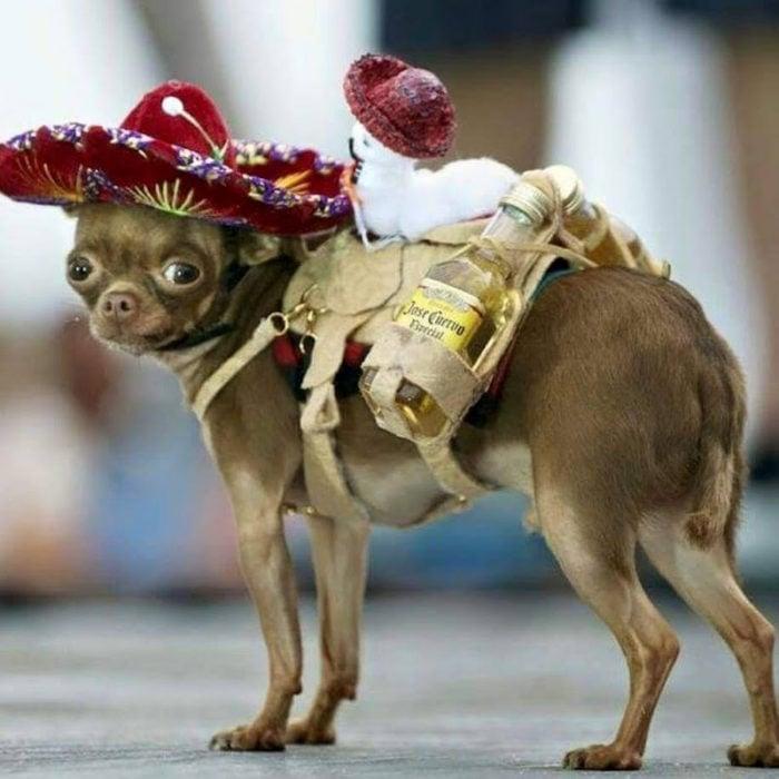 Perrito disfrazado de Mariachi