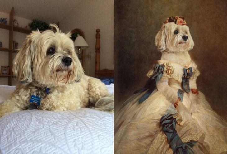 Perro con vestido de mujer