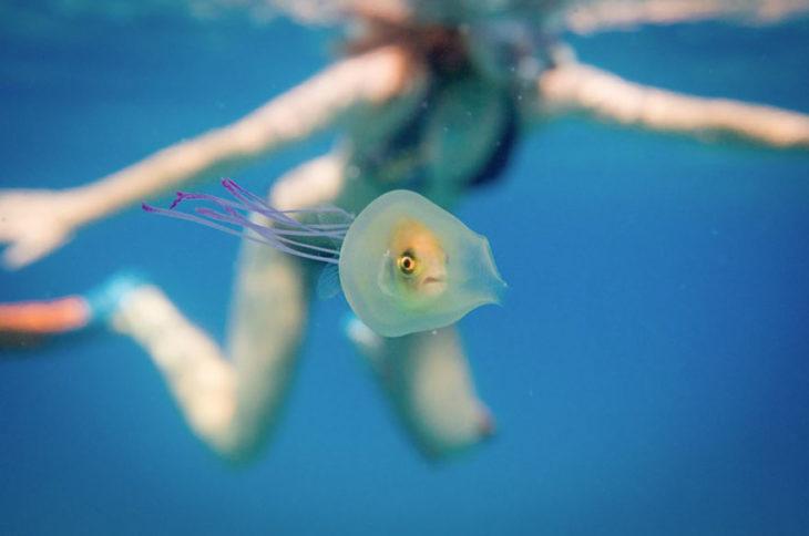 Pez adentro de medusa