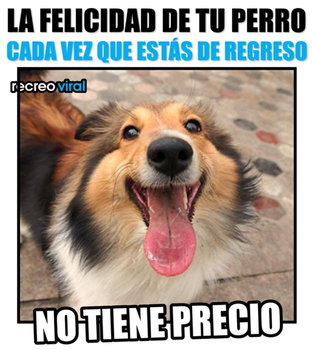 Meme Recreo Viral de la felicidad de tu perro cuando regresas a casa