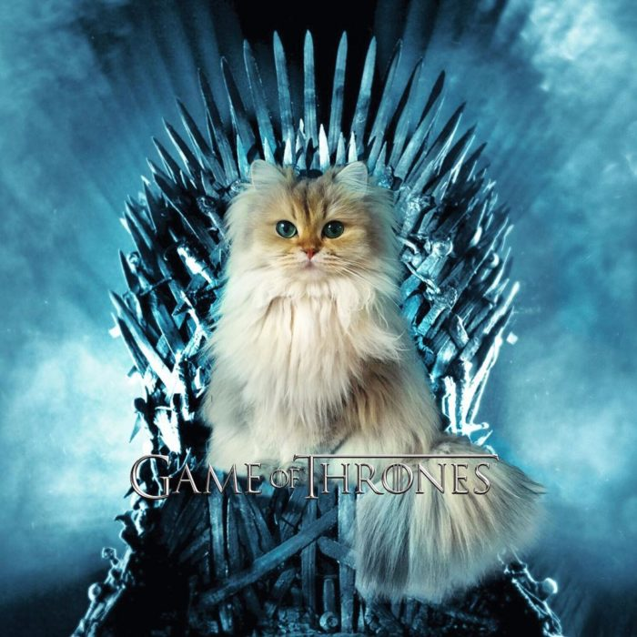 Gato personificando Game of Thrones