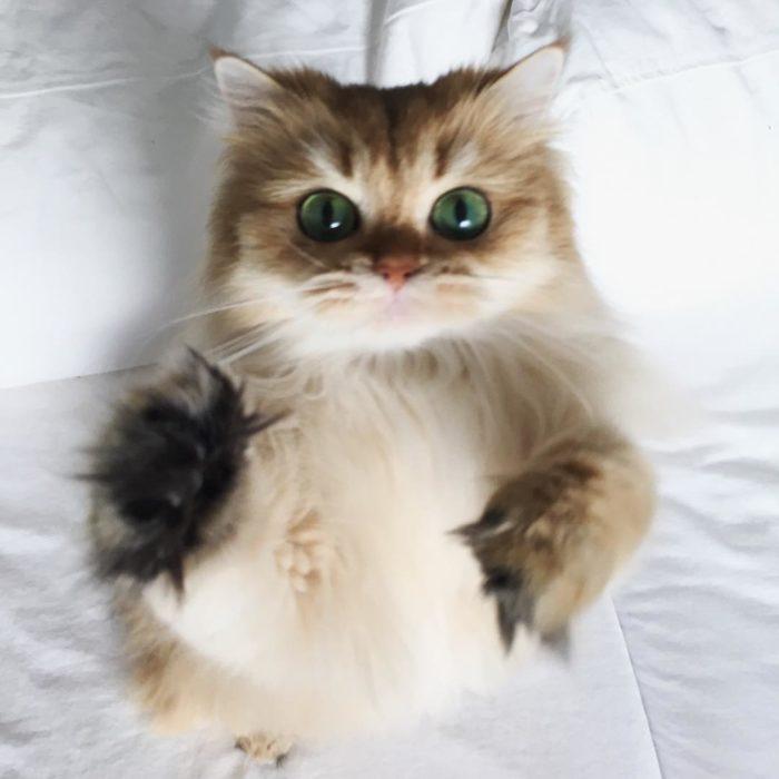 Ojos enormes en gato