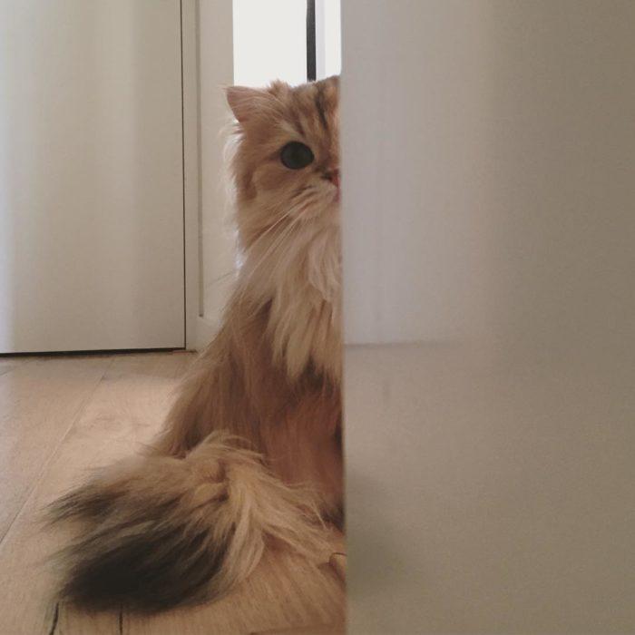 Gato de espía