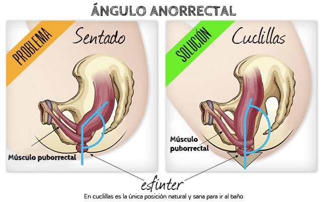 ángulo anorrectal relajación de músculo puborrectal
