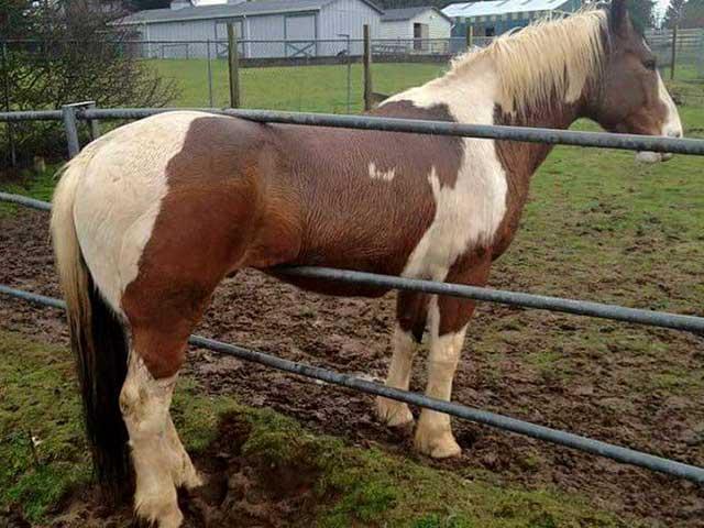 Fotos sin explicación. Un caballo atorado entre dos barrotes de metal