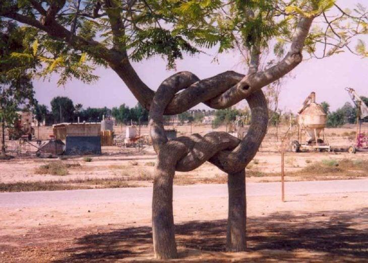 Fotos sin explicación. Dos árboles cuyos troncos se entrelazaron entre sí