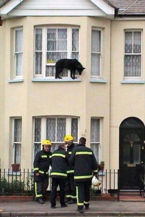 Fotos sin explicación. Un perro en el borde de una ventana por la parte de afuera de la casa