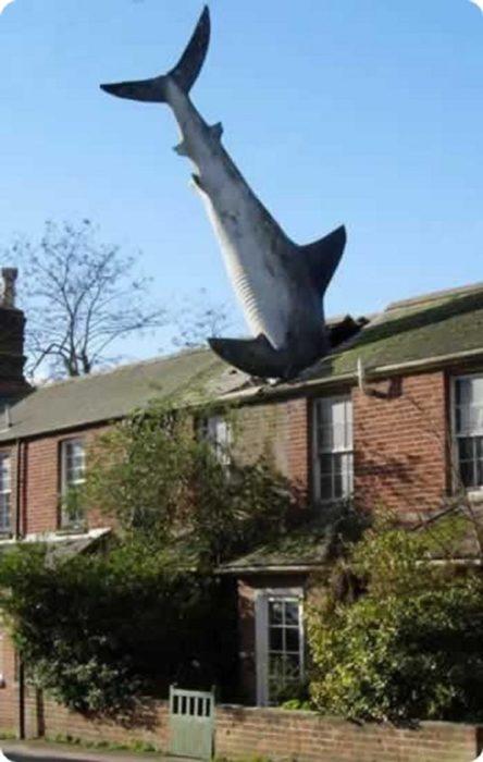 Fotos sin explicación. Un tiburón cae en el techo de una casa