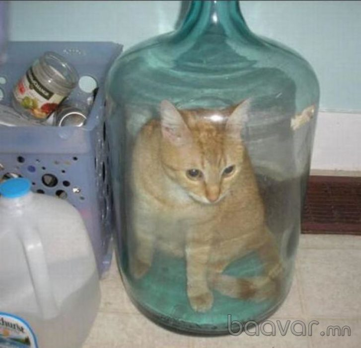 Fotos sin explicación. Un gatito encerrado en una botella con un cuello muy chico