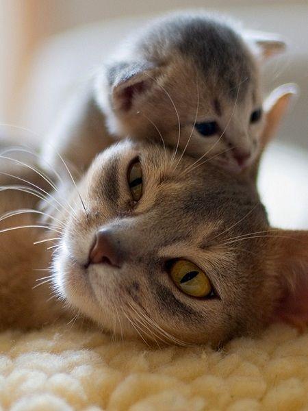 mama gato con su cato bebé