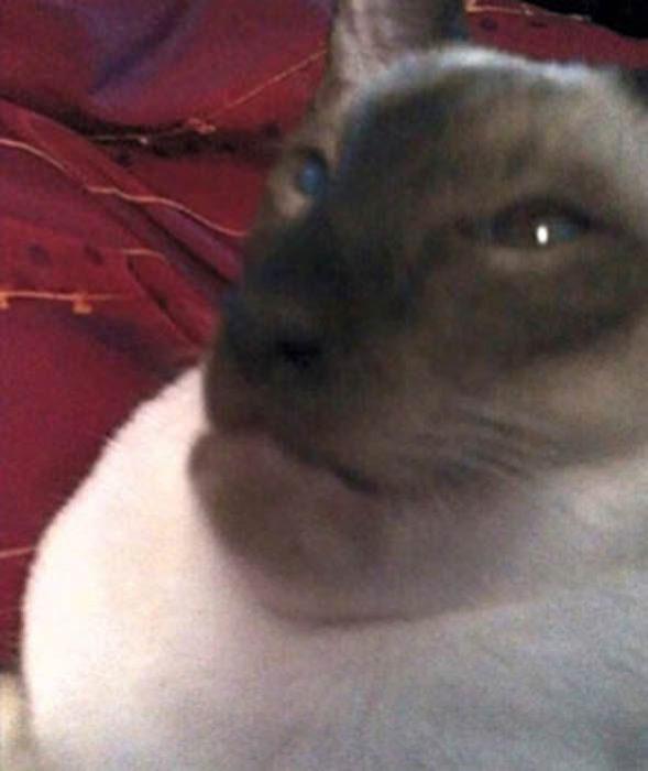 gato picado avispa