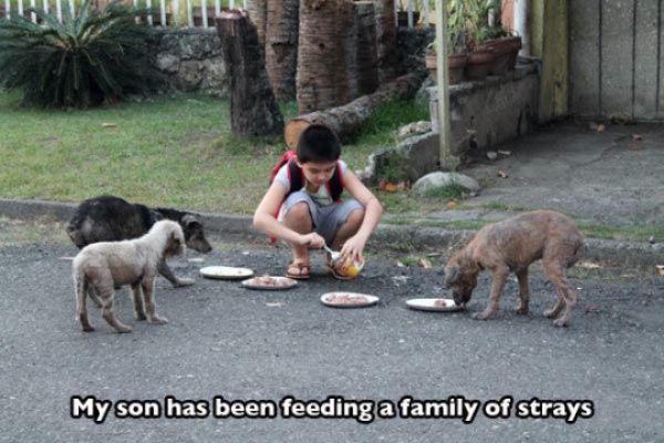 niña dando de comer a perros