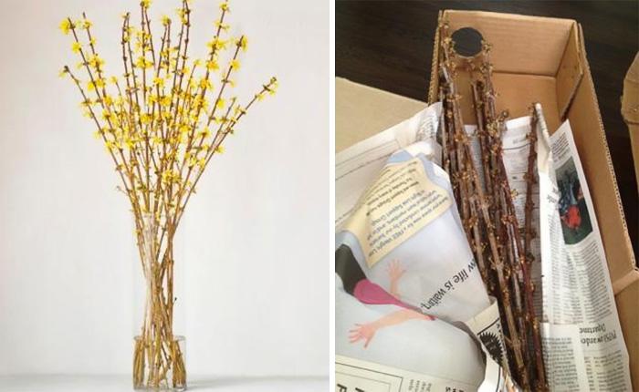 De un lado unas ramas para decoración de interiores, del otro lado una caja con ramas de madera secas