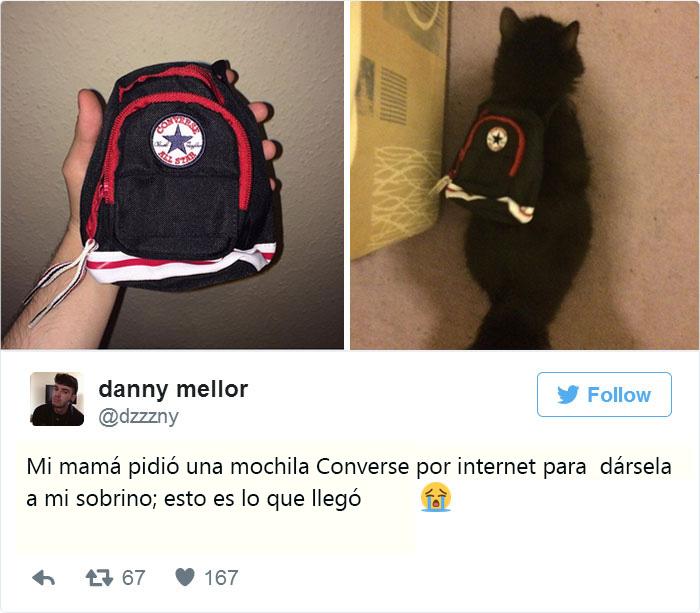 Gato con una mochila mini converse